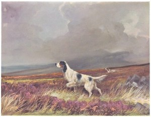 wardbinks30senglishsetter