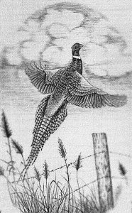 Banknote engraved pheasant in flight by Steve Lindsay