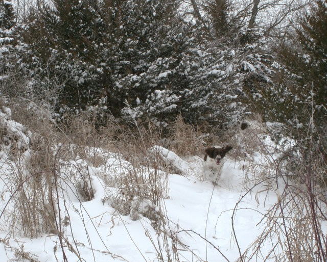 A late season pheasant hunt can be a test of skills and stamina for you and your dog.