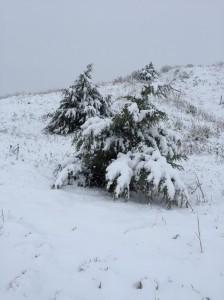 snow-storm-in-mckelvie