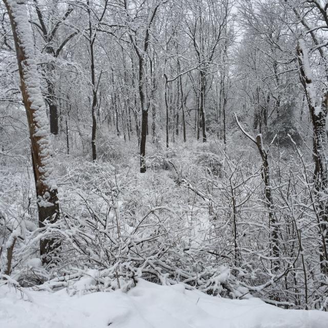 winter-walk-10