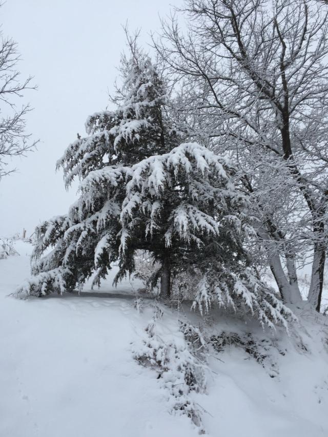 winter-walk-12
