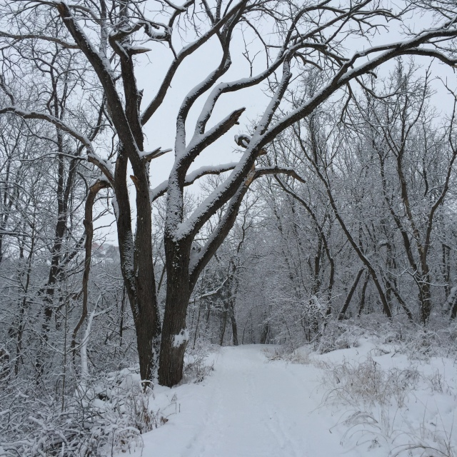 winter-walk-5
