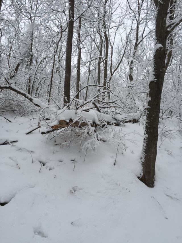 winter-walk-7